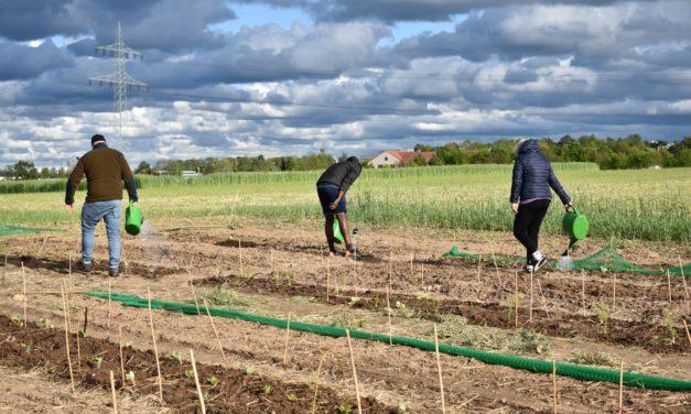 Gemeinsam ackern für morgen – Urban Farming auf dem Zukunftsacker